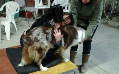 La chiropratica e gli animali