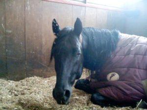 La salute del cavallo