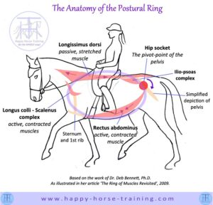 802xNxdressage_diagrams_postural_ring.jpg.pagespeed.ic.3F8TfMSScp
