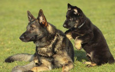 L'età del cane e l'attività sportiva