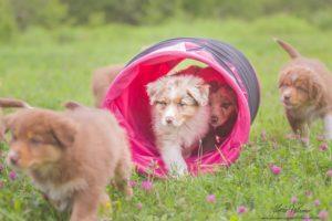 l'età del cane e l'attività sportiva, a cura di Arenavet