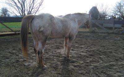 Come valutare e migliorare la postura del cavallo