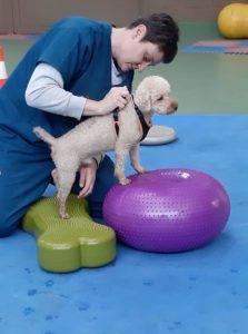 La fisiatria in medicina veterinaria