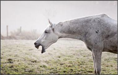 La terapia naturale per la bronchite cronica ostruttiva del cavallo o RAO