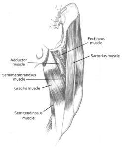 La miopatia del gracile e le patologie della colonna vertebrale: la storia di Virna